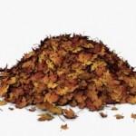 Heap of leaves
