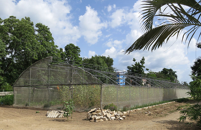 Urban agriculture in Cuba (image: WikiPedia)